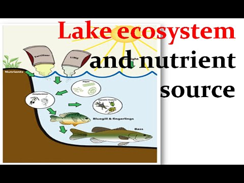 Lake ecosystem and nutrient source