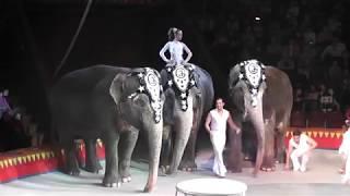 Животные в цирке. Часть 1.