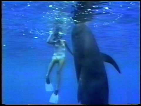 Pilot Whale & lady swimmer