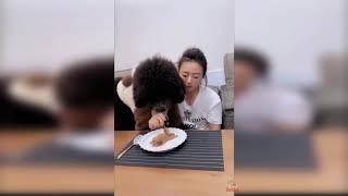 Dog Reaction to Cutting Cake   Funny Dog Cake Reaction Compilation