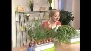 блюда из зеленого лука
