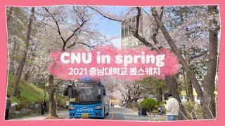 2021년 충남대의 봄🌸🌺 | CNU IN SPRING