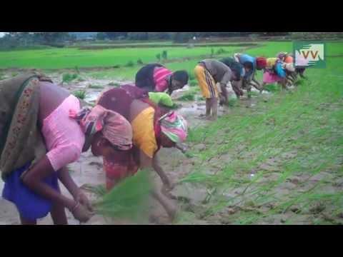 Rajesh Farmer Got Cheated-Prakash Gupta reports for IndiaUnheard