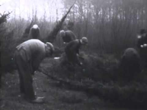 Dennenbomen voor Kerstmis   8 december 1930