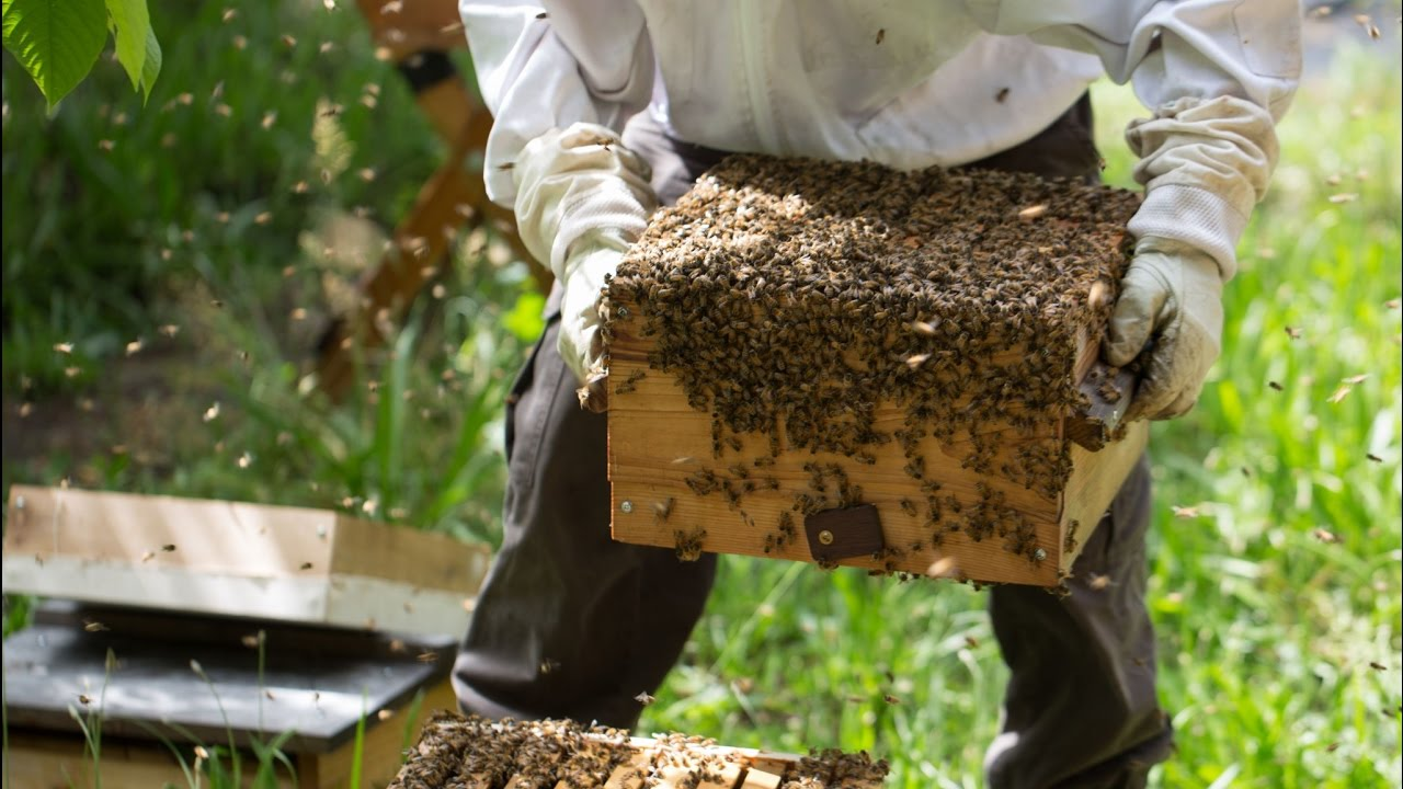 How to Inspect a Beehive How to Inspect a Beehive new images