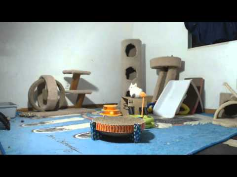 Babylon 5 Kittens - Susan Adjusts the Light