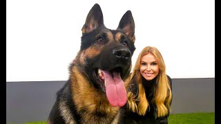 THE GERMAN SHEPHERD DOG - Working line or Show?