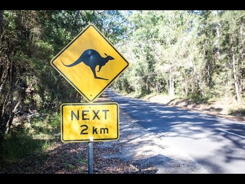 Melbourne To Sydney - The Best Things To See On A Road Trip For A Week!