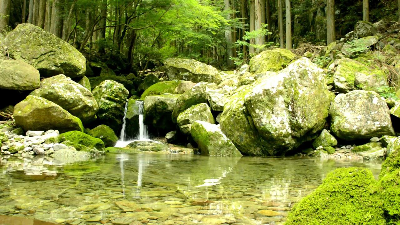【自然の音】山奥の風そよぐ泉 / Nature Sounds - The Birdsongs in a Spring of a Ravine Blowing a Soft Breeze