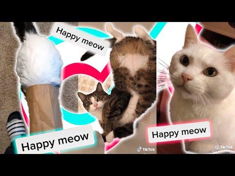 🤣 FUNNY Cats TIKTOK Compilation 2020 🌈 | gatos Fabulosos