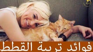 10 فوائد لتربية القطط