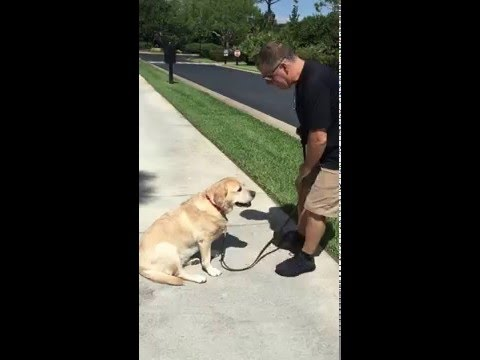 This is one smart dog Maggie doesn't want to go for a walk she wants to go home