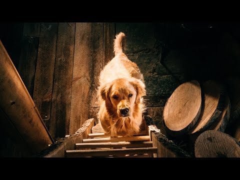 Chainsaw Woodworking with the Cutest Dog on YouTube