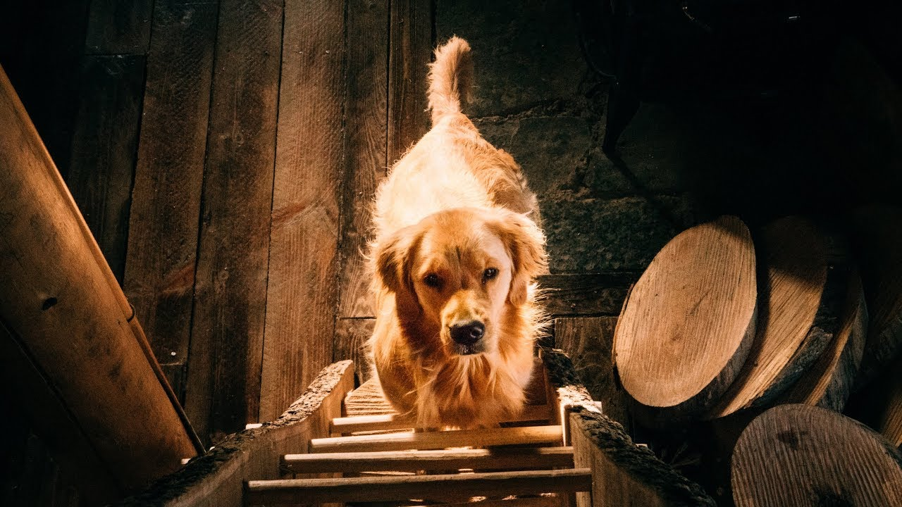 chainsaw-woodworking-with-the-cutest-dog-on-youtube