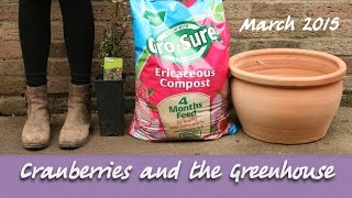 Katie's Allotment - March 2015 - Cranberries and the Greenhouse