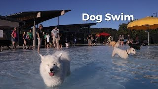 Athens Dog Swim 2019