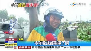 不敵九級強陣風 1500棵香蕉樹攔腰全吹斷│中視新聞 20190824