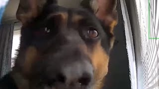 security-footage-picks-up-hilarious-footage-of-guard-dog