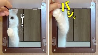ENG) My cat's reaction is cute when I put a pet door on my room door.