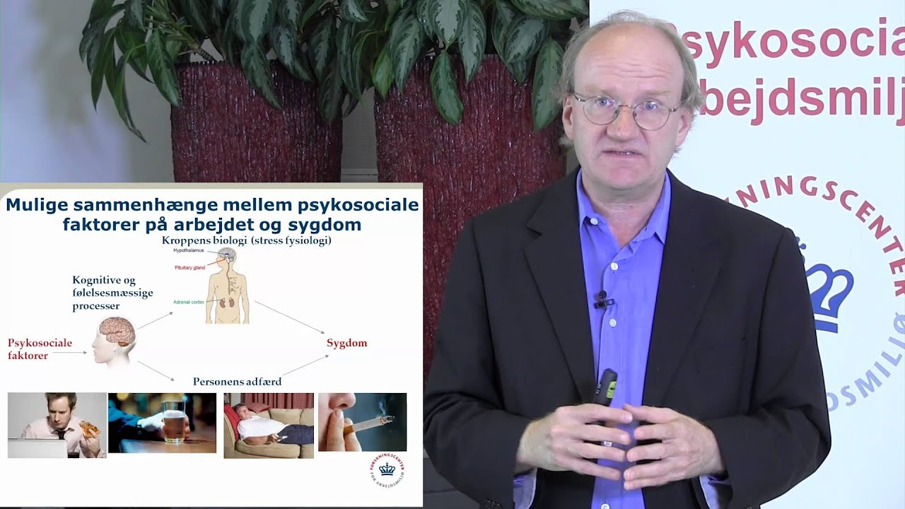 stress fysiologi
