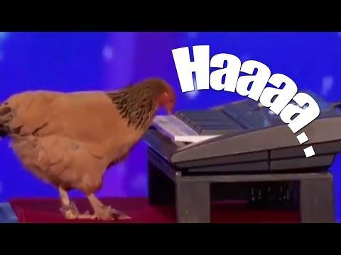 Chicken Playing on Keyboard Piano - America's Got Talen
