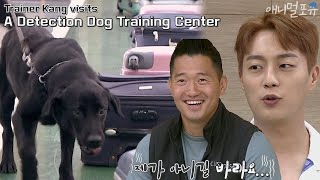 Trainer Kang Visits a Detection Dog Training Center [Dogs Are Incredible]