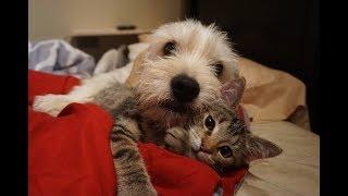 Среди всех котят в приюте для животных только на этого малыша нельзя было взглянуть без слез