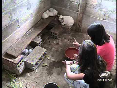 Los conejos son animales que pueden vivir dentro de casa for Cria de tilapia en casa