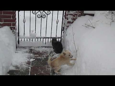 Funny Dog – Funny Cats – A Funny Dog Videos – Funny animal compilation