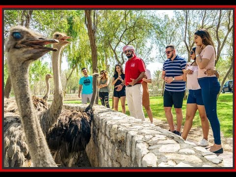 Spring Break In Bahrain - A Relax and Fun day schedule