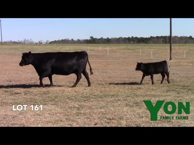 Yon Family Farms Lot 161