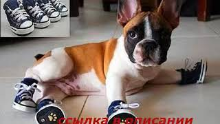 Обувь для собак купить в санкт петербурге
