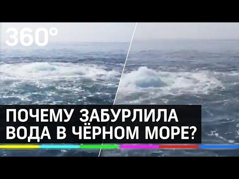 Гигантские медузы в канализации Сочи. Почему забурлила вода в Чёрном море у Лазаревского?