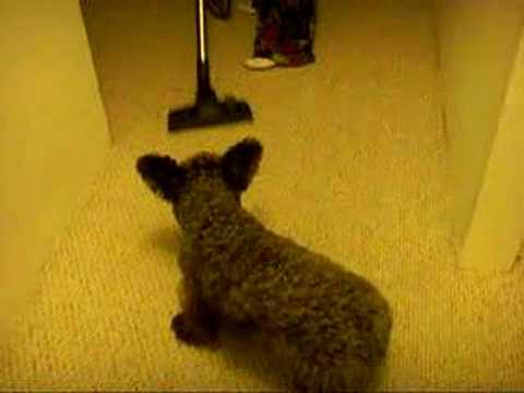 funny commercial miele washing dog doovi. Black Bedroom Furniture Sets. Home Design Ideas