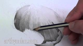 how to draw onions pencil drawing