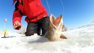 Ловля щуки на жерлицы 2106 на малых реках зимой со льда