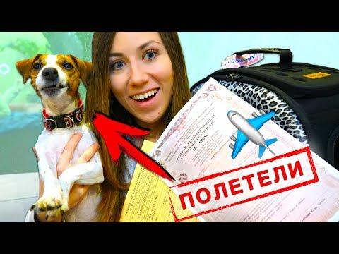 СОБАКА В САМОЛЕТЕ КАК ЛЕТАТЬ C ПИТОМЦЕМ | Elli Di Pets