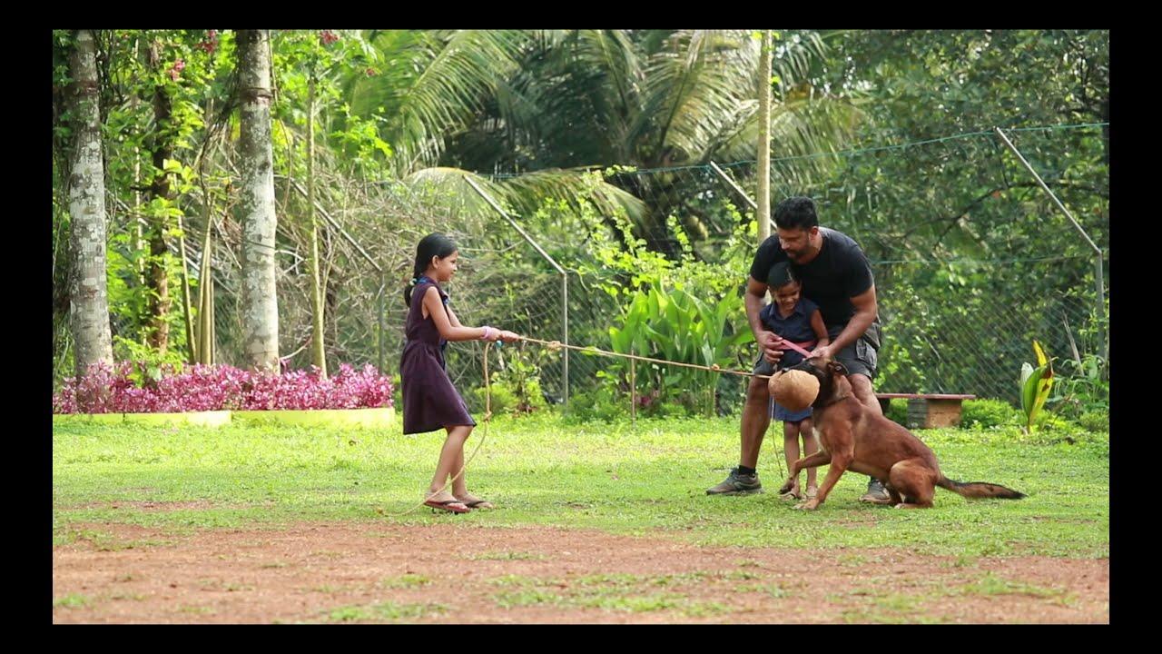 #Dog handling (advanced) course.Saajan Saji Cyriac dog training school.9961310970.