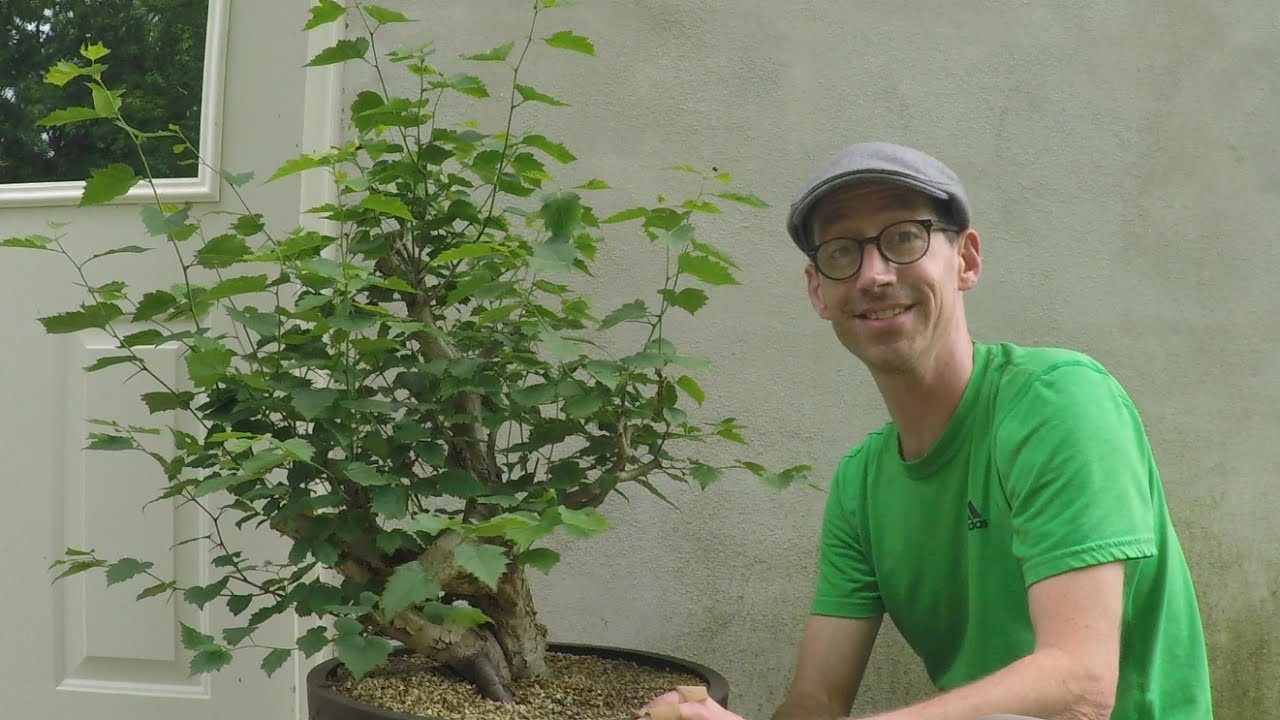 Bonsai Collected Material Update Spring 2017 Youtube