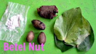 Betel Nut (Areca Palm) Review and Analysis - Weird Fruit Explorer
