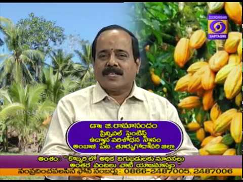 Coconut farming Tips and Techniques By Dr.G.Ramanandam,Scientist,East Godavari