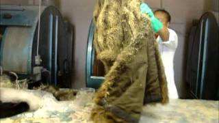 Cleaning fur coats