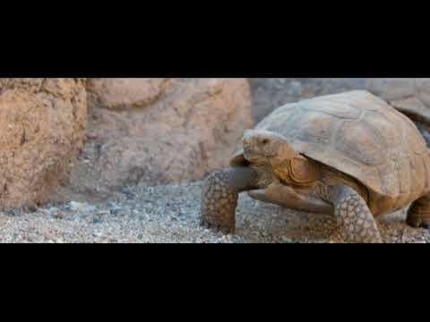 23 мая - Всемирный день черепахи