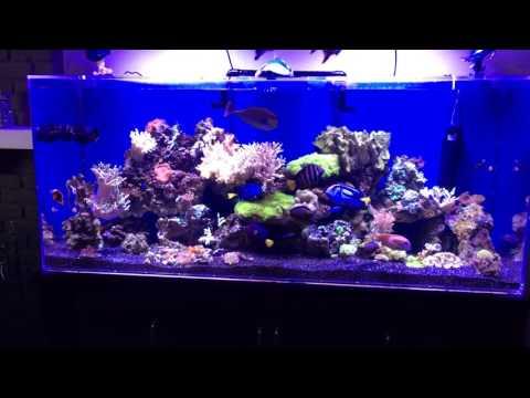 225 Gallon Saltwater LPS Coral Reef Aquarium With Black Hawaiian Sand