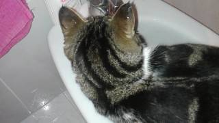 ♥Murchik Gordi Junior♥Me encanta el agua :))))