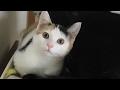 猫連中がソファを独占❗️ガンモちゃんと愉快な仲間達‼︎