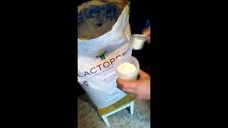 LACTOMIN 80 WPC 80% / КСБ 80% (концентрат сывороточного белка)(, 2017-05-06T14:51:32.000Z)