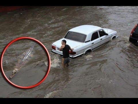 Heavy Rains Flood Houston Streets, Making Holiday Travel Difficult