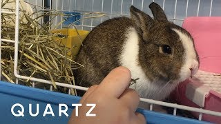 Hong Kong's first rabbit cafe