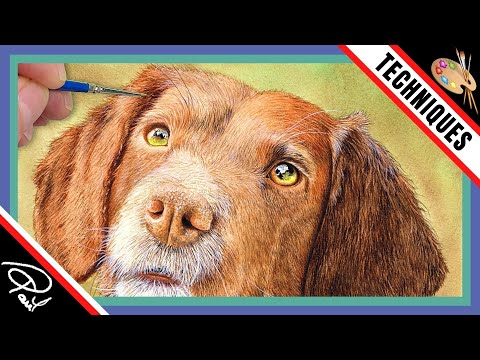 Dog Fur Watercolour Painting Tutorial How To Paint An